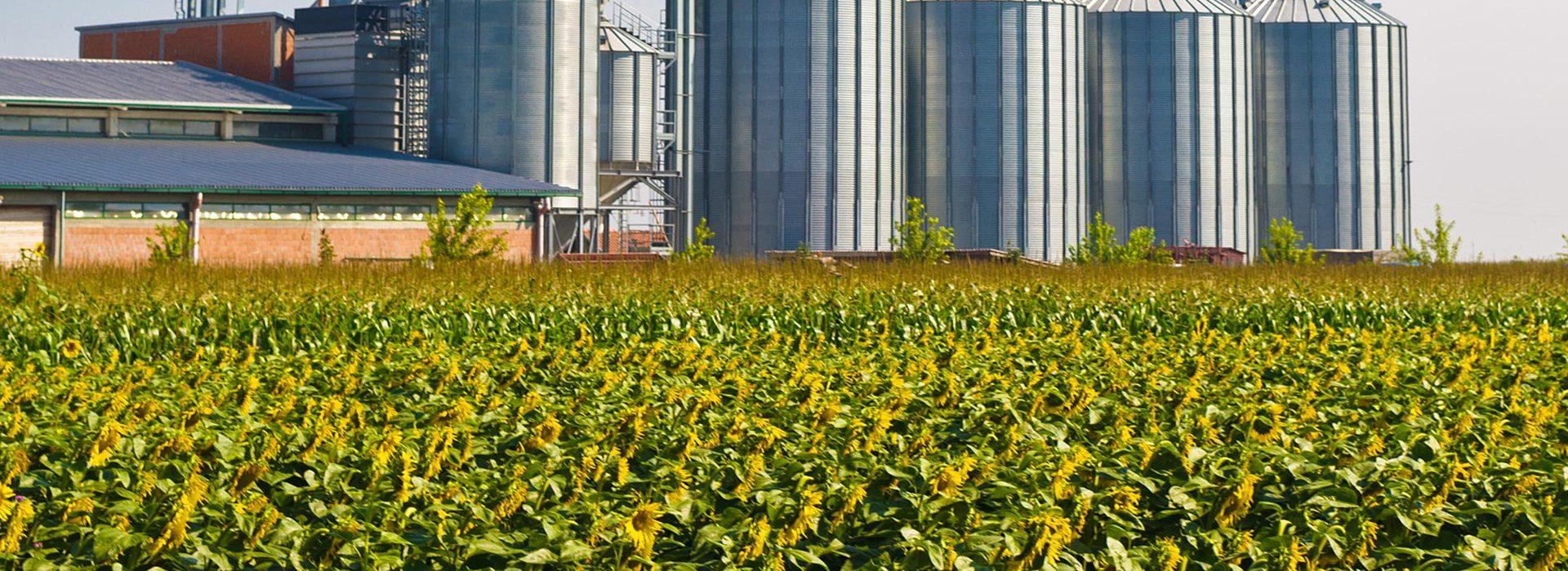Landwirtschaft (BGA)
